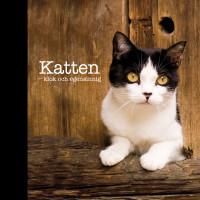 Katten - klok och egensinnig
